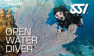 OWD - Open Water Diver